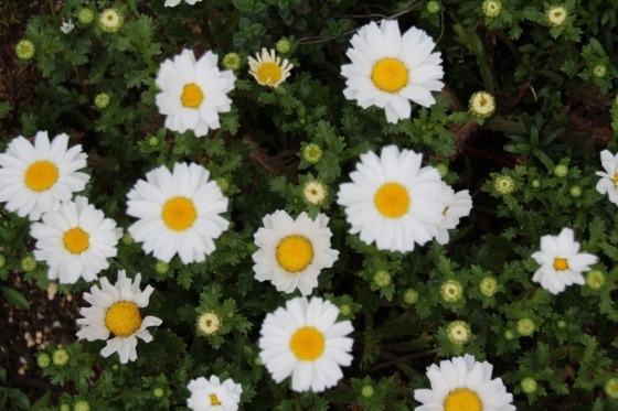 めくるめく春_b0132338_11183552.jpg