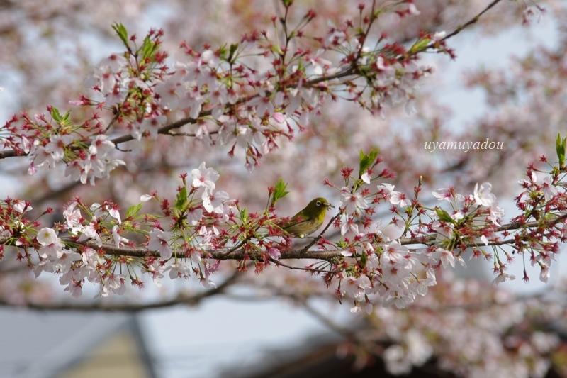 温和しい......そんな春_a0157263_22363915.jpg