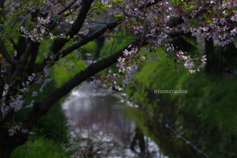 温和しい......そんな春_a0157263_22363968.jpg