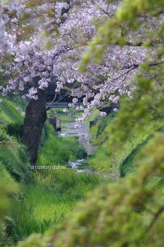 温和しい......そんな春_a0157263_22364091.jpg