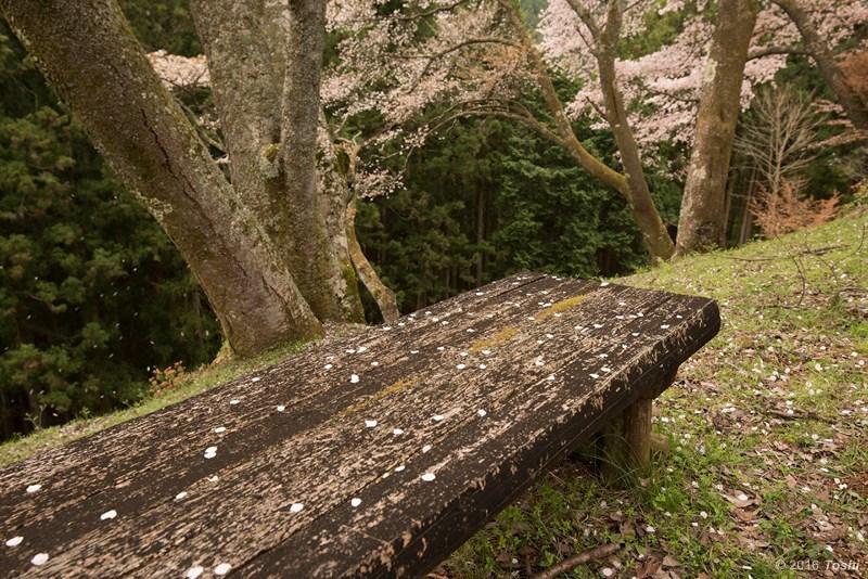山桜 満開_c0350572_21213746.jpg