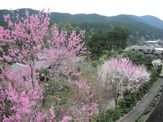 矢倉岳870mに行きました_e0232277_11472130.jpg