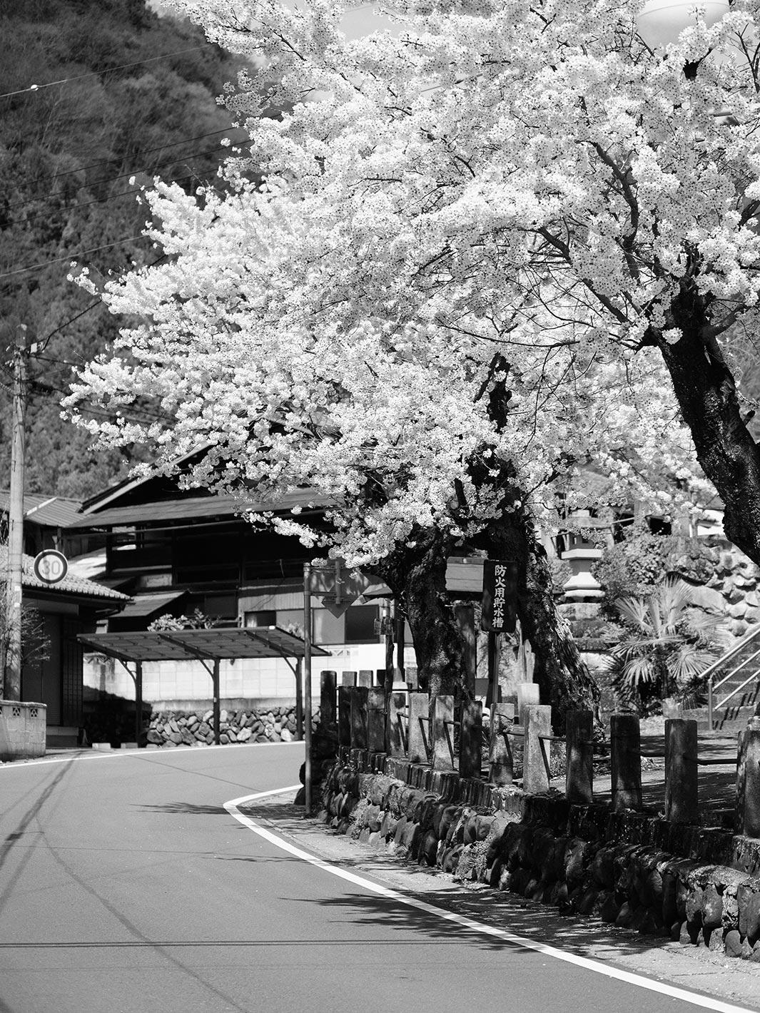 桜の頃_f0121181_23573170.jpg