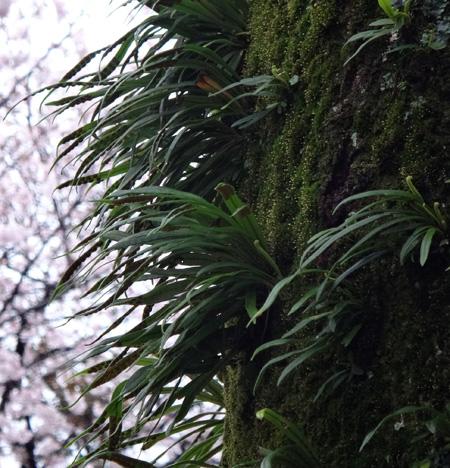 のんびり?駆け足? 高崎線で桜の小旅行2 早川から小田原へ~♪_a0136293_17202850.jpg