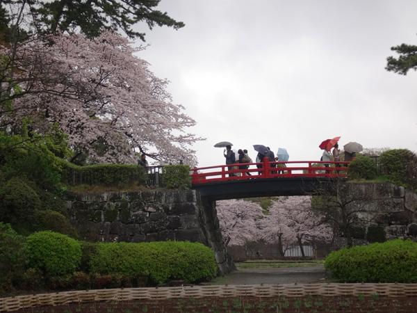 のんびり?駆け足? 高崎線で桜の小旅行2 早川から小田原へ~♪_a0136293_1722569.jpg