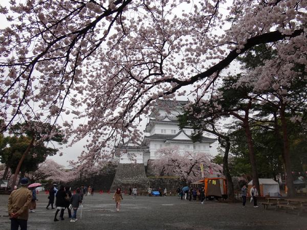 のんびり?駆け足? 高崎線で桜の小旅行2 早川から小田原へ~♪_a0136293_1723364.jpg