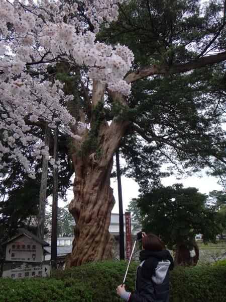 のんびり?駆け足? 高崎線で桜の小旅行2 早川から小田原へ~♪_a0136293_17304297.jpg
