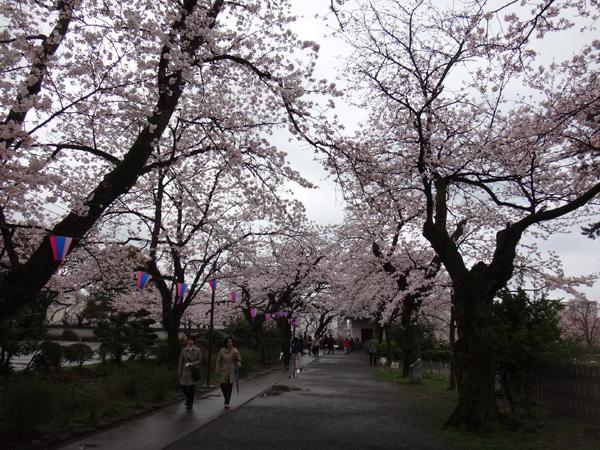のんびり?駆け足? 高崎線で桜の小旅行2 早川から小田原へ~♪_a0136293_17315346.jpg