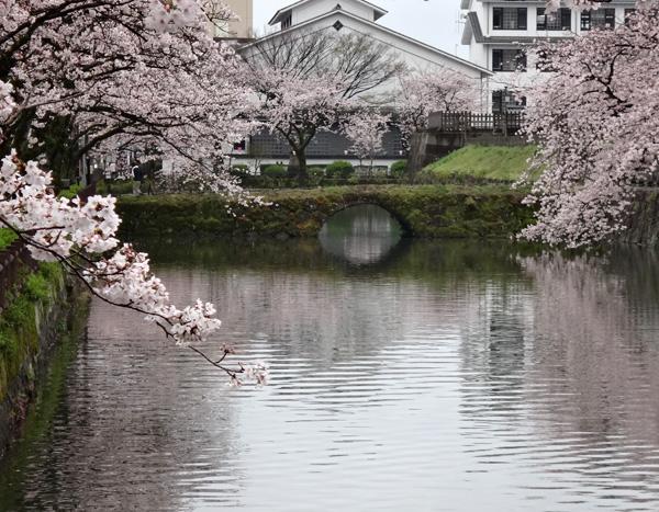 のんびり?駆け足? 高崎線で桜の小旅行2 早川から小田原へ~♪_a0136293_19243166.jpg