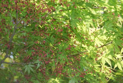 春の花々とワンコ_f0101201_14214616.jpg