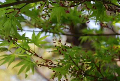 春の花々とワンコ_f0101201_1422452.jpg