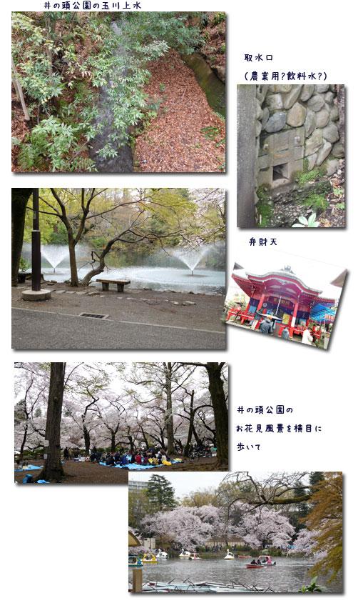 玉川上水ウォーキンギ 2 (三鷹駅~久我山駅)_c0051105_11222225.jpg