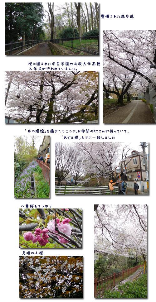 玉川上水ウォーキンギ 2 (三鷹駅~久我山駅)_c0051105_16303040.jpg