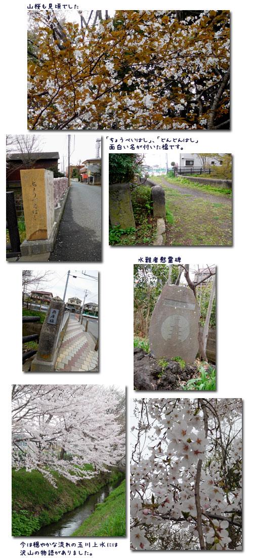 玉川上水ウォーキンギ 2 (三鷹駅~久我山駅)_c0051105_21275439.jpg