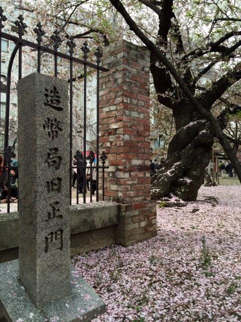 造幣局の桜_a0326106_12322930.jpg