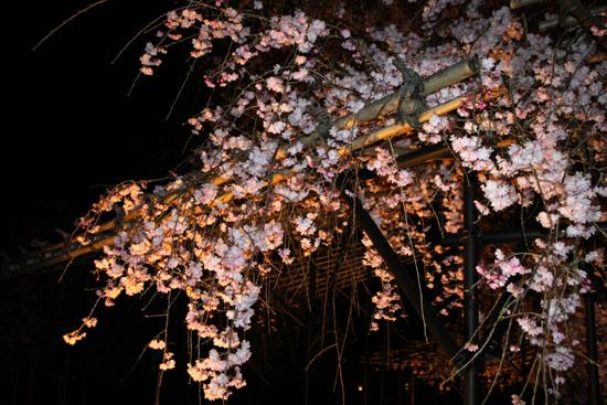 上賀茂神社ライトアップ_e0048413_212306.jpg