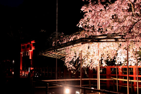 上賀茂神社ライトアップ_e0048413_21231650.jpg