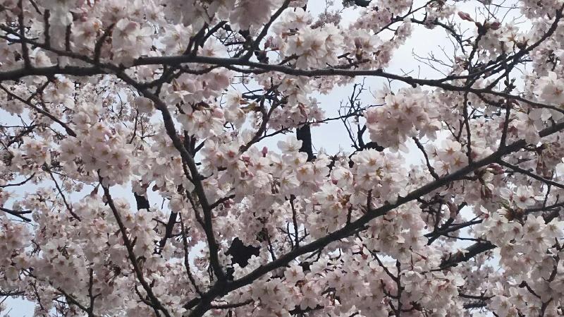 栄白翠園 訪問演奏_f0200416_924366.jpg