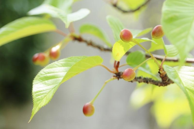 茶和や香(45)、六鹿茶遊会(34)_b0220318_18572383.jpg