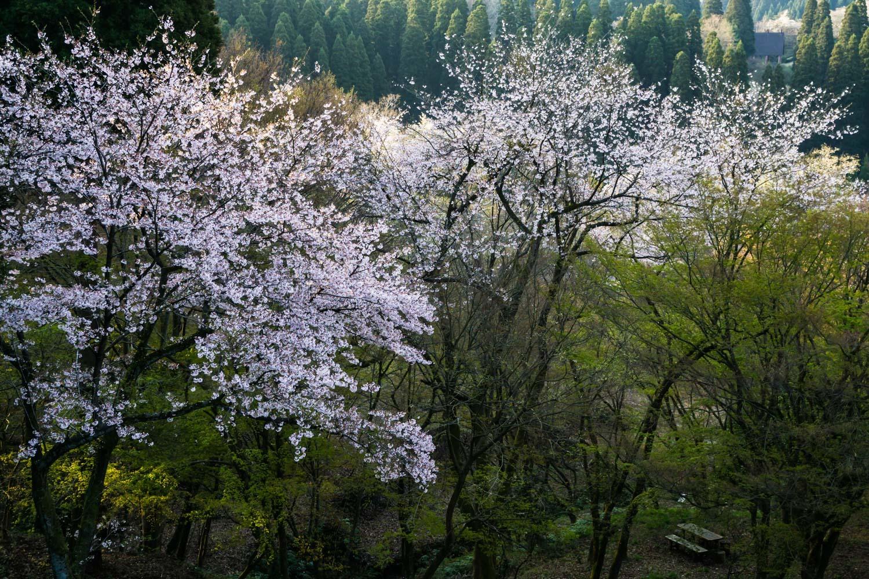 春の冷えた朝_c0220824_20010080.jpg