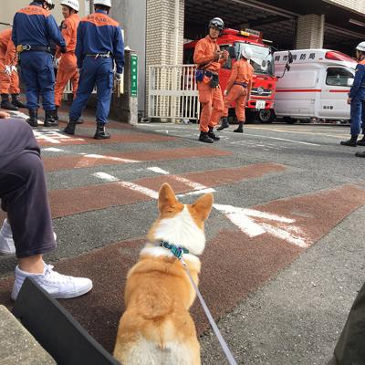 消防車になりたい_f0035333_22273269.jpg