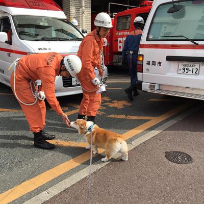 消防車になりたい_f0035333_22355070.jpg