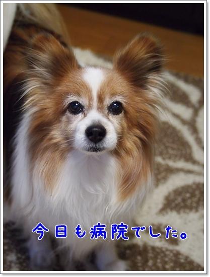 d0013149_23230011.jpg