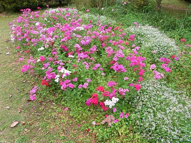 庭の花_e0158687_9275654.jpg