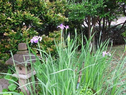 庭の花_e0158687_9293651.jpg