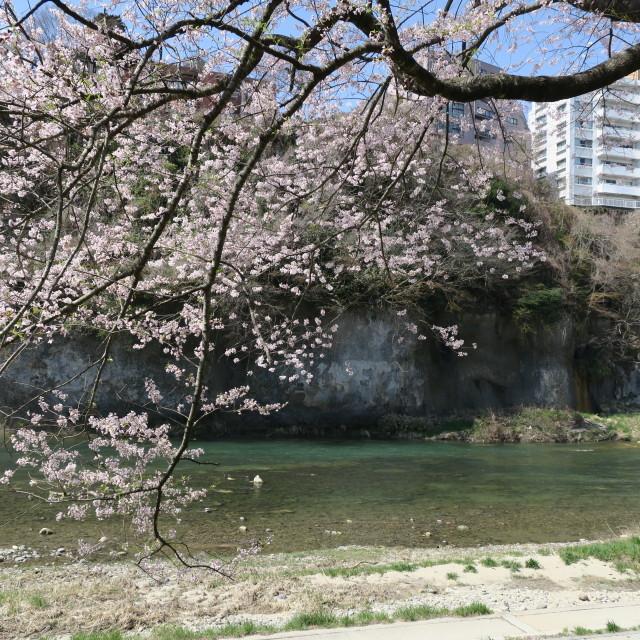 G9Xを片手にお花見散歩@片平~広瀬川_f0100593_15274222.jpg