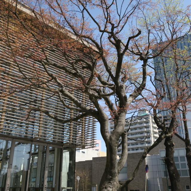 G9Xを片手にお花見散歩@片平~広瀬川_f0100593_15280753.jpg