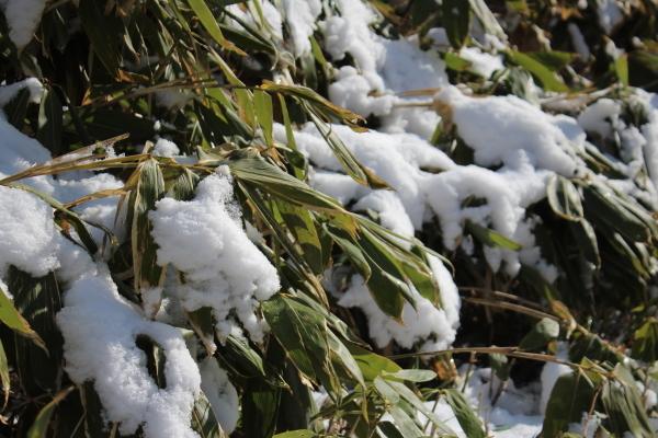 雪が降りました_f0227395_14363916.jpg