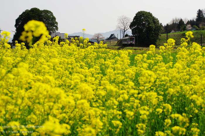 春色に_d0309612_0311266.jpg