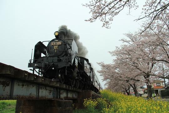 桜と菜の花と真岡鉄道_b0207413_1248999.jpg