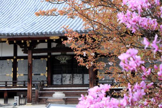 2016さくら便り45 仁和寺御室桜_e0048413_16562435.jpg