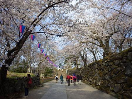小諸 懐古園の桜!_d0035921_1222679.jpg