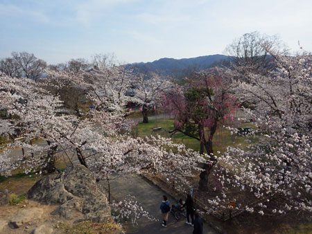 小諸 懐古園の桜!_d0035921_1224569.jpg