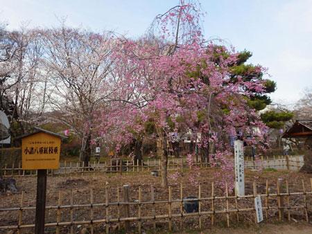 小諸 懐古園の桜!_d0035921_1232452.jpg
