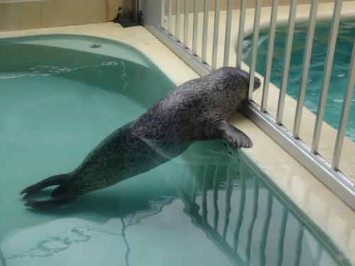 富山の魚津水族館(*^^*)_f0170422_08043403.jpg