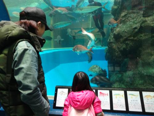 富山の魚津水族館(*^^*)_f0170422_08043555.jpg