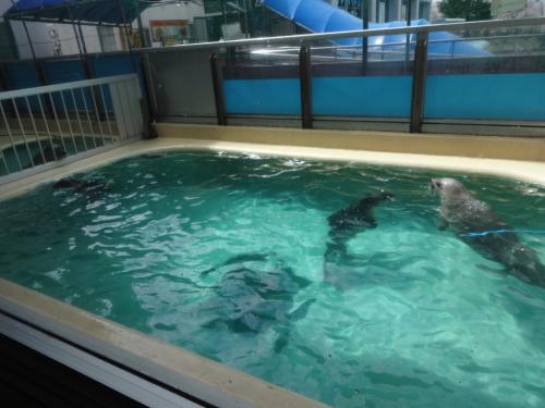 富山の魚津水族館(*^^*)_f0170422_08043571.jpg