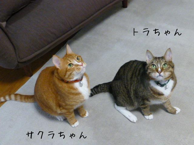 お留守番 にゃんこ ギャラリー 【March】_e0237625_11561953.jpg