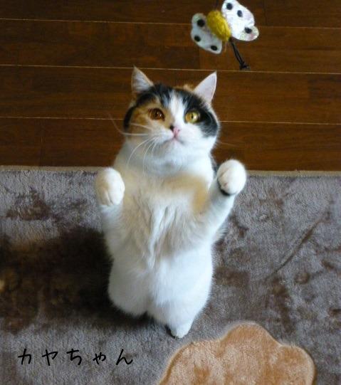 お留守番 にゃんこ ギャラリー 【March】_e0237625_1295977.jpg