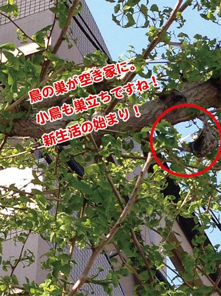 東急ハンズ京都にお越しいただきありがとうございました!_a0129631_10433167.jpg