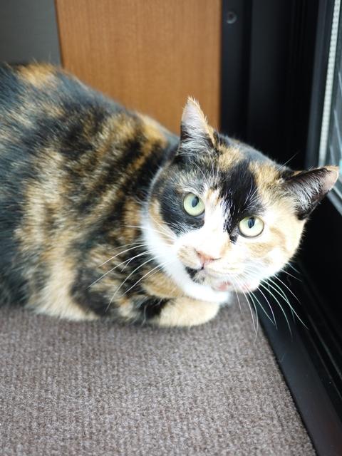 猫のお留守番 ごまちゃん編。_a0143140_2222954.jpg