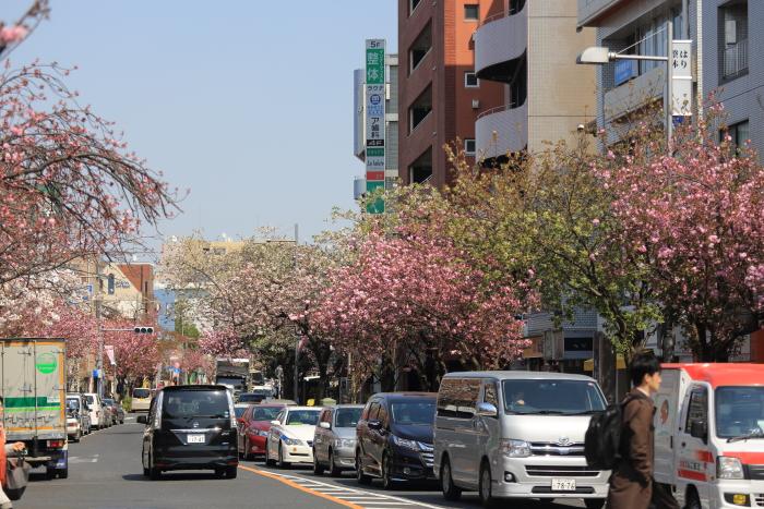 桜新町_b0188569_14193988.jpg