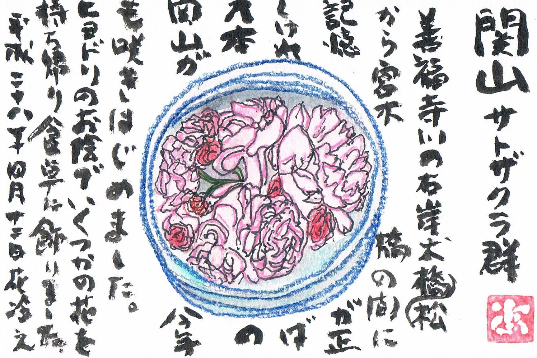 関山というサトザクラ_e0232277_1053212.jpg