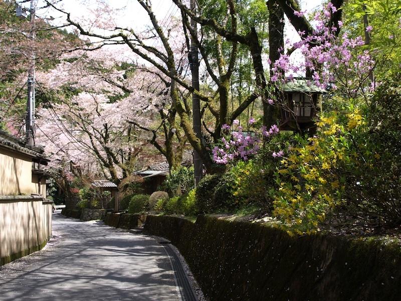 新緑とミツバツツジ 刻々と変わっていく春の色について_e0122680_13411061.jpg