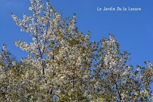 桜_f0329586_15234479.jpg