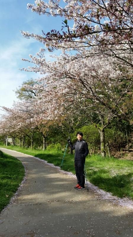 桜舞い散る鶴林寺_e0326688_10370321.jpg